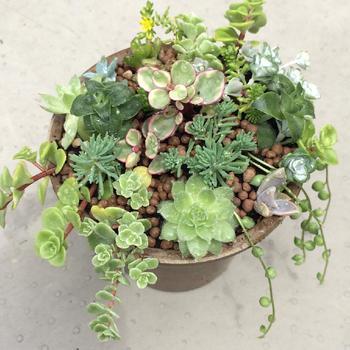 癒しのグリーンスポット♪観葉植物の「おしゃれな寄せ植え」を楽しみましょう