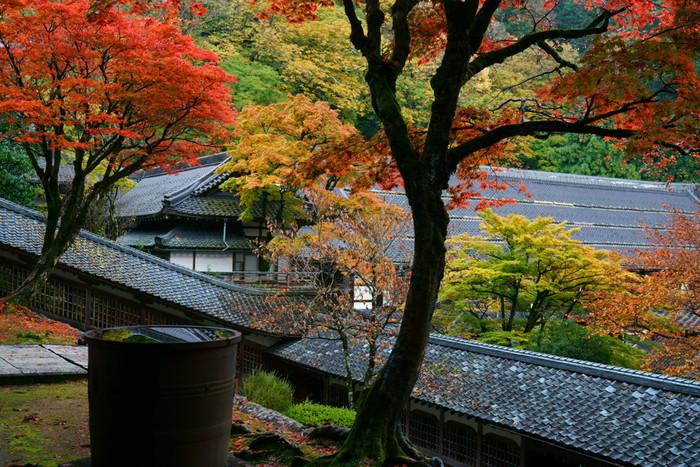 境内にさらに風情が増すのは、秋の紅葉の時期。また、旅行では避けて通りたい雨の日も、永平寺では静けさに磨きがかかります。