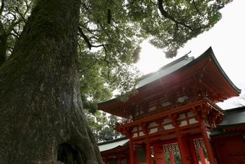 まずは大宮の氷川神社そばにあるカフェからご紹介。  と、その前に・・大宮の氷川神社(正式には、武蔵一宮 氷川神社)、ご存知でしょうか?TVや雑誌で取り上げられることも多い、とっておきのパワースポット。県内外から、数多くの人々が訪れている神社なんですよ。  ちなみに、この神社は「大宮」の名の元にもなっており、境内までまっすぐ伸びる参道の長さは、なんと2km!日本最長とも言われるこのケヤキ並木もまた、地元の人々に愛される特別な場所です。