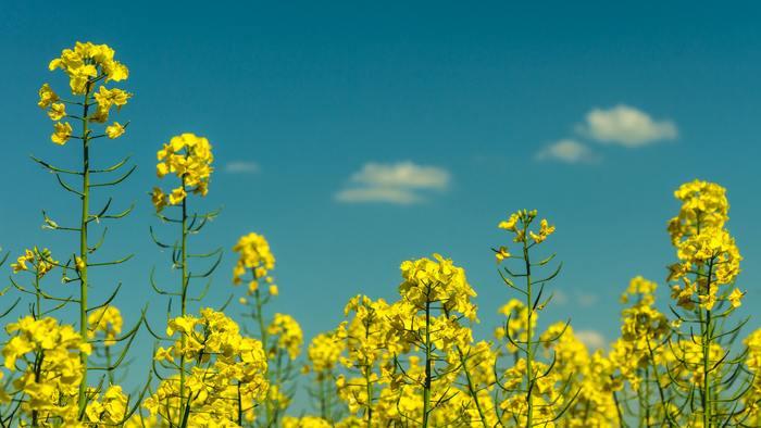 """まんねりアイメイクは、もう卒業。""""イエローアイシャドウ""""で目元に花を咲かせましょ*"""