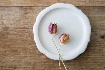 稜花皿は、蓮弁のような尖った先端と控えめな花弁が特徴。しなやかな曲線が、上品さを醸し出します。さりげない印象なので、料理を引き立てたい方にもおすすめ。