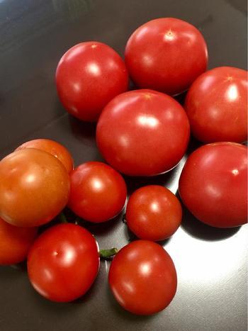 病気に強くて育ちやすく、実付きもいい大玉トマト。果肉もしっかりしていて、食べ応えがあります。生食におすすめ。写真の奥の大きなトマトですね。