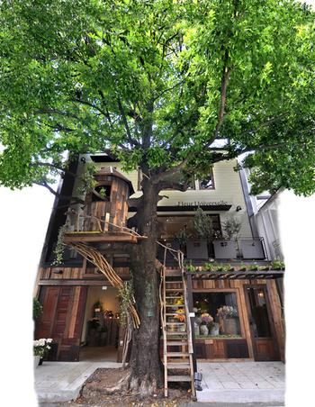 大きなシンボルツリーがお出迎えしてくれる、インパクト抜群のカフェがこちら♪