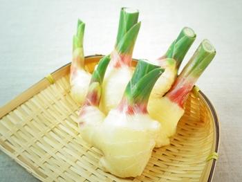 5月から6月にかけてスーパーなどに出回る「新生姜」は、普段、私達が目にする「根生姜」と比較すると、柔らかく、辛みも穏やかで、香り高くみずみずしいのが特徴です。