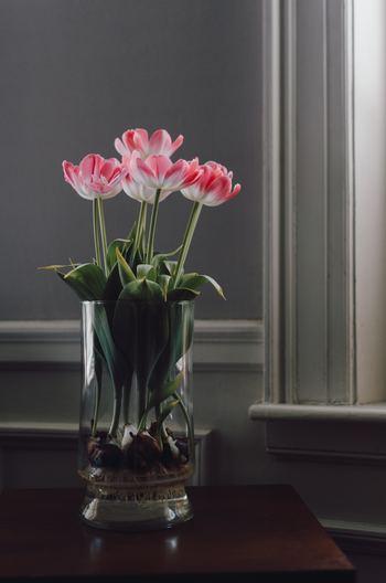 花瓶に球根のまま入れて目で愉しむ水耕栽培。しっかり根を張って咲いている様子を眺めていると、「自分も頑張ろう!」と元気をもらえそう◎