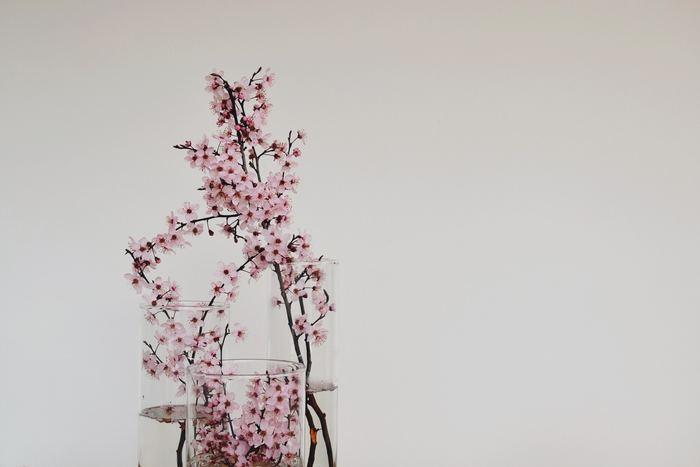 高さや太さの違うシンプルな円柱の花瓶に、それぞれ違う活け方で桜を活けます。1つにはにゅっと伸びるようにたっぷり長さを出し、2本目には控え目に顔を覗かせ、3本目はあえて花器の中に納めます。ありそうでなかったモダンな飾り方で大変身◎