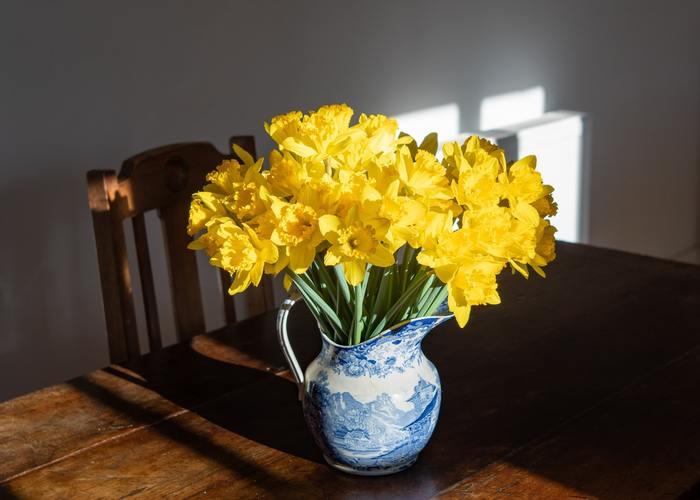 黄色と相性がいい、薄いブルーが綺麗なピッチャー。黄色とブルーとのコントラストで、空間にもあたたかみが増します。スイセンはたっぷり飾りましょう。