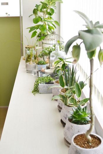 インテリアグリーンは、サイズ違いで置くとそれだけで奥行きのある素敵なインテリアになります。ぜひ大小サイズもさまざまに、取り入れてみてください。  置き方のコツは、大きな鉢植えを主役にして配置すること。こちらのお宅のように、端の大きな鉢植えからスタートして、横並びに小さな鉢植えを並べると見た目もきれい。