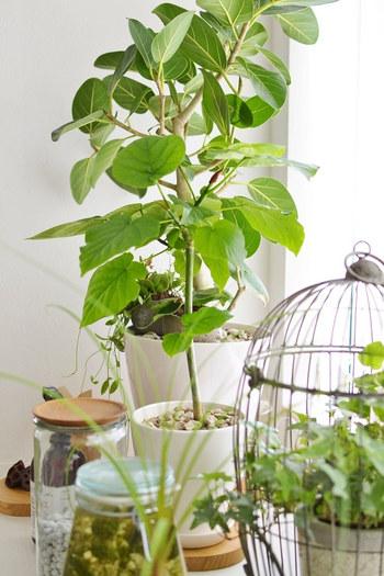 日当たりが良いところ、あまり日が当たらないところなど、それぞれの植物には発育しやすい環境があります。植物の特徴をしったうえで、窓際、床、棚など、思い思いの場所にインテリアグリーンを散りばめてみましょう。きっと、あなたらしい表情豊かな空間になるはずです。