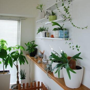 あなたもぜひ、お気に入りの飾り方でインテリアグリーンがある暮らしを楽しんでみてくださいね。