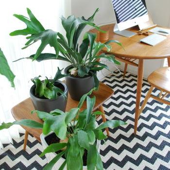 こちらのお宅のように、テーブルやチェアの上に置いたり、床に直置きしたりと高低差をつけることで、見た目も楽しくおしゃれ感も出ます。