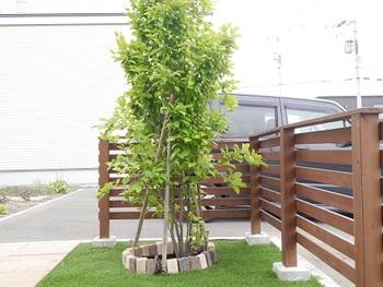 植栽に取り入れる樹木は、高木、中木、低木などサイズや種類などさまざまなタイプがあります。木は成長で高さが変わるもの。最大でどの程度伸びていくかも選ぶポイントになりますよ。