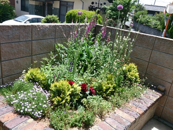 アプローチや庭に彩りをプラスするなら、いくつかの種類の草花を寄せ植えするのがおすすめです。小さなスペースでも、インパクトのある植栽が楽しめますよ。