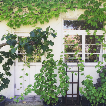 建物と植栽が調和するには、建物の素材や色、デザインと草木がマッチしているのかがポイントに。植栽だけを見て選ぶのではなく、建物に合うかバランスを考えることが大切です。