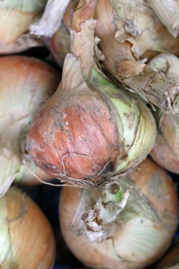 通常玉ねぎは日持ちさせるために、収穫してから1ヶ月くらい乾燥させますが、新玉ねぎは収穫してすぐに出荷されるため、皮が薄くて瑞々しく柔らかいのが特徴。辛みが少ないので、サラダなどの生食やさっと火を通すだけで食べるのがおすすめです。
