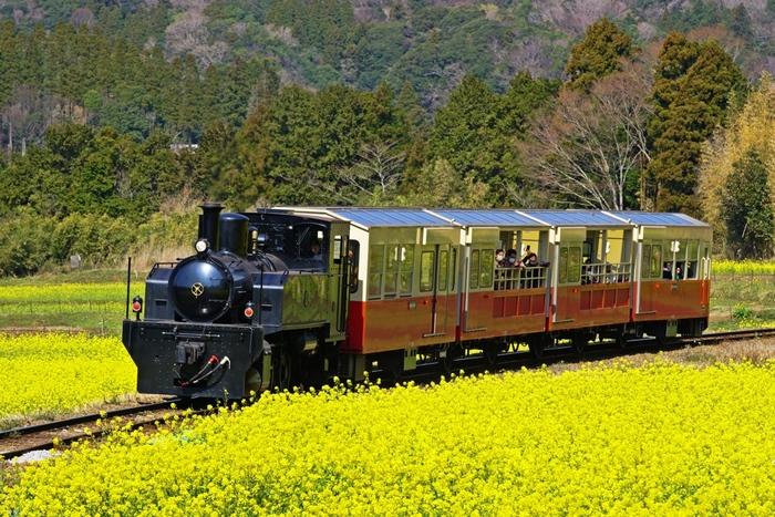 全長39.1kmの小湊鐵道の路線のうち、上総牛久駅から養老渓谷駅までの18.5kmの区間を走る「里山トロッコ」。大正時代に実際に走っていたSLを再現した列車はレトロ感満載。春から秋にかけて平日2往復、休日は2~3往復運行し、片道約1時間かけてのんびりと走ります。