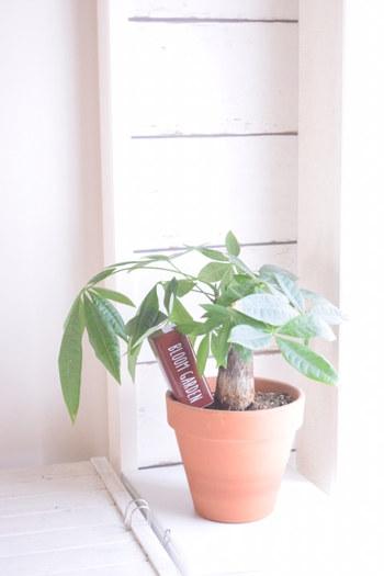 「あぁ、今日もいい天気だな」と窓から外を覗いたとき、植物が窓辺にあると「植物も気持ちよさそう」と優しい気持ちになれるかもしれません。あなたも植物も気持ちよくなれる場所って、窓際なのかもしれませんね。