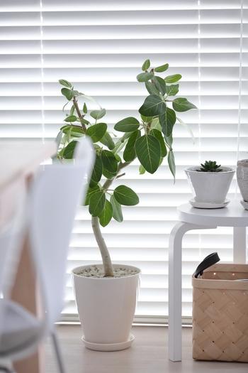 背が高すぎず、かといって小ぶりでもないグリーンは、スツールの隣に置いて高さ遊びをしてみましょう。ちょっとの凸凹によって、植物がなんだかリズミカルに生き生きとして見えて、空間にも心地よいぬけ感を演出できるでしょう。