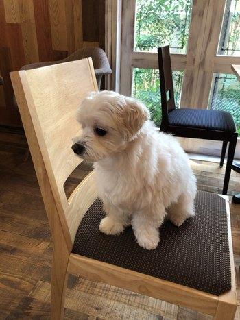 お客さんの間では、看板犬が大人気なんですよ。名前はグルテンフリーのお店らしからぬ「こむぎ」くん。素敵なお食事とワンちゃんに癒されてみてはいかがでしょうか♪