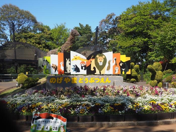 「野毛山動物園」は横浜市西区にある、みなとみらいを見下ろす高台にある動物園。ライオンやトラ、キリン、ペンギンなどの人気の動物たちを見られる本格的な動物園であるにもかかわらず、なんと入園無料なんです。