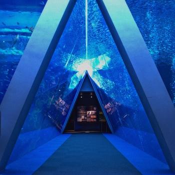 本館の2・4階にある「三角トンネル」は、潮目を表す大水槽です。福島県沖で交わる黒潮と親潮を象徴する2つの水槽では、マイワシやカツオ、サンマなどが力強く泳いでいます。