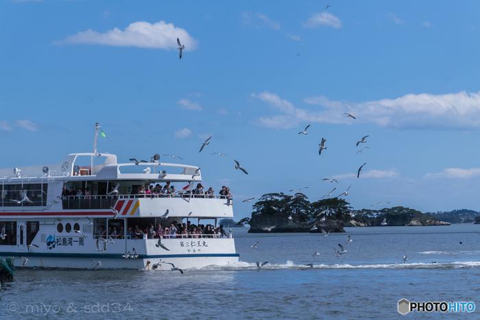 松島観光なら、湾内を遊覧船でゆったりと巡るコースがおすすめ。仁王島、鐘島、千貫島、雄島、双子島、と松島の島々を約50分かけてまわります。甲板に出るとウミネコたちがまるで先導してくれているよう。