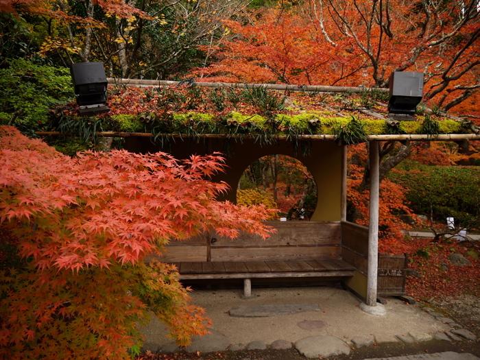 紅葉が美しいことでも知られ、秋には境内のあちこちの木々が色づき、息を飲むほどの美しさ。夜になるとライトアップされ、幻想的な雰囲気も魅力です。