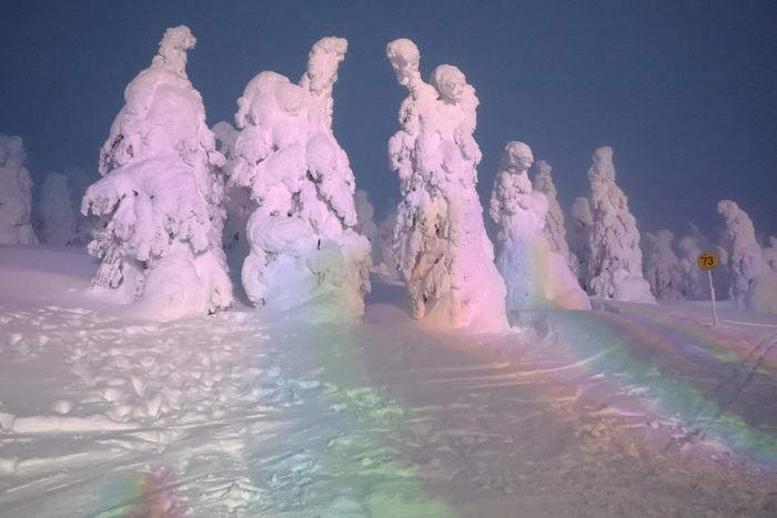 """蔵王の樹氷は、アオモリトドマツという針葉樹が雪と氷に覆われて作られます。雪と氷によって次第に大きくなっていく姿は""""スノーモンスター""""とも呼ばれているんですよ。樹氷のライトアップは他にはないので、冬に宮城を訪れたらぜひ見てみませんか?"""