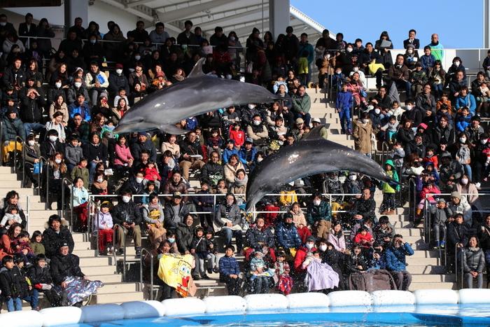 東北最大級のイルカとアシカのパフォーマンスは、ワクワクドキドキのショー。一般的なプールのようなアクリル面がないので、距離が近く臨場感あふれるパフォーマンスが見られますよ。