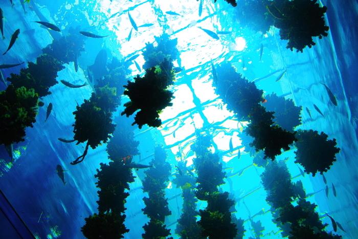 三陸のリアス式海岸をテーマにした宮城らしい水槽もあります。牡蠣や海藻の養殖の様子が分かりやすいですね。