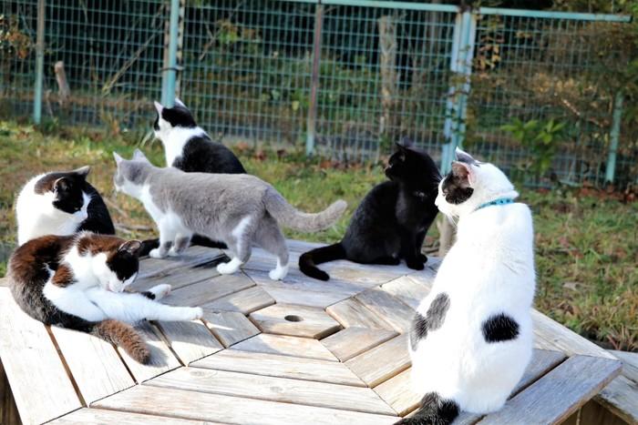 島民よりも猫の数が多いと話題になっている「田代島」は、旧北上川河口発着所から定期船で約40分ほどのところにある小さな島。島内のあちこちでのんびりくつろぐ猫たちに出会えます。