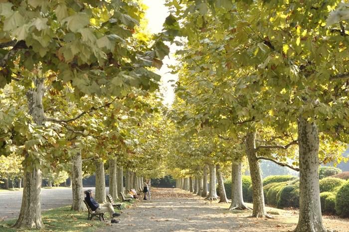 東京を代表する公園のひとつである新宿御苑は手入れのしっかりとされた公園です。新宿御苑の中でもっともおすすめのフォトジェニックスポットは、フランス式整形庭園のプラタナス並木です。紅葉の季節はとくに美しいのですが、一年を通して、それぞれ異なる木々の風景を味わうことができます。