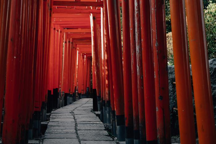 根津神社は1900年ほど前に千駄木に創祀されたといわれる神社です。国の重要文化財にも指定されており、御本殿は1706年の完成から全てが欠けずに今に至るそう。根津神社のもっとも有名なフォトスポットは、こちらの赤い千本鳥居。とても華やかで幻想的な日本の風景を撮影することができます。