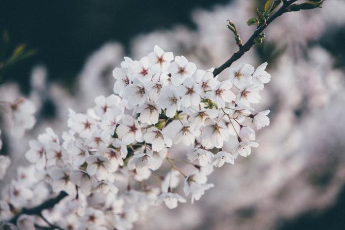 季節は春。学生さんも、社会人さんも、新生活スタートの季節♪気持ちも新たに清々しい気分でスタートを切りたいですね!