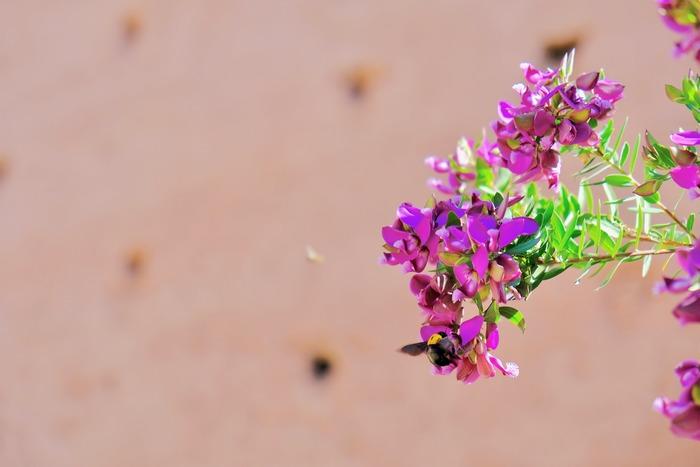 新学期や新年度、心踊る様々な'コト'が始まる4月は、満開のピンクの桜やチューリップなど美しい花々も咲き誇り、卯の花が咲く季節ということから「卯月」とも呼ばれています。