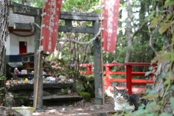 島の中央にある「猫神社」には、大漁の守護神として猫神様(美與利大明神)が祀られていて、古くから島の漁師さんに大切にされています。田代島は2~3時間でまわれるので、散策にもおすすめです。