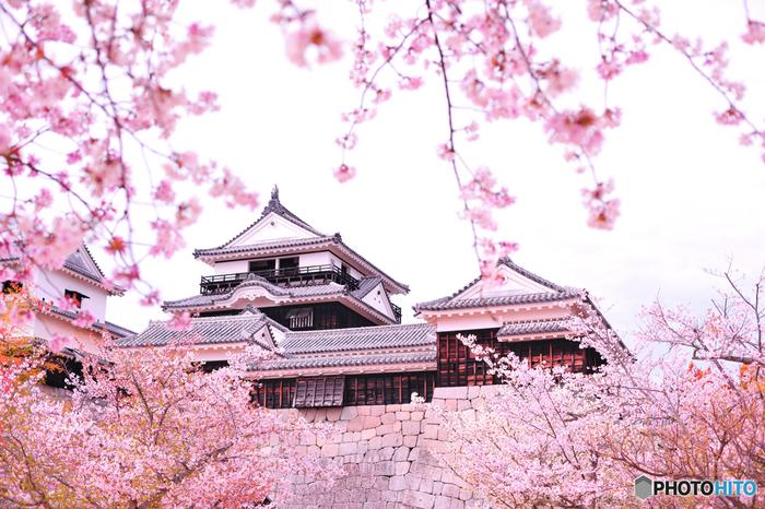 道後温泉で宿泊して翌日の朝は、江戸時代以前に建造された天守を有する城郭の一つ「松山城」を見学。道後温泉から車でおよそ10分ほどの場所にあるので、是非とも行って見たい場所です。フランスのガイドブックで二つ星を獲得しただけあって、標高161mもある天守の最上階からの見える景色は最高です。