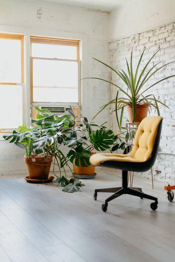 グリーンの置き場所は、明るい窓際がおすすめ。そのため、窓まわりのインテリアをシンプルにすると、鮮やかなグリーンが引き立ちます。 リネン素材のカーテンでナチュラルな雰囲気に、あるいはブランドでモダンな雰囲気に。グリーンのまわりにほどよい空間ができるように、インテリアを引き算するのもポイントです。