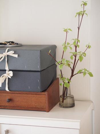 剪定した枝の中で元気なものがあれば、お部屋での観賞用に飾るのもおすすめですよ♪お庭でもお部屋でもハナミズキの息吹を楽しんでみてください。