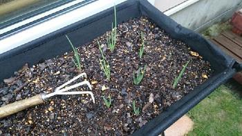 水やりは、土の表面が乾いたらたっぷりと。乾燥が続くと、育ちにくくなります。プランターは、日当たりと風通しのいい場所に置きましょう。