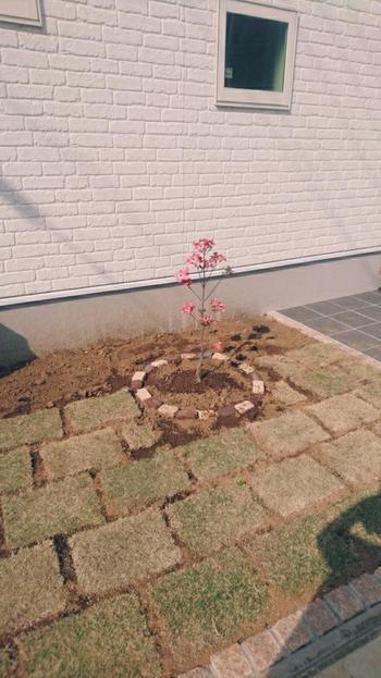 土作りは、育て方の基本ポイントである、通気性と水はけのよい土を意識して作りましょう。地植えの場合も鉢植えの場合も、植え付けたら水をたっぷりと与えてくださいね。
