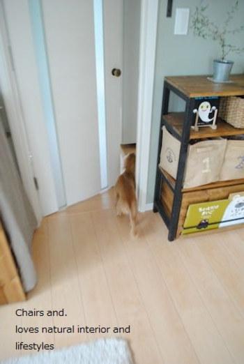 ペットは自分でドアノブを回すことができないので、ドアが閉まってしまうと自由に行き来できなくなってしまいます。今あるドアを開け閉めできるように調整できるといいですよね。