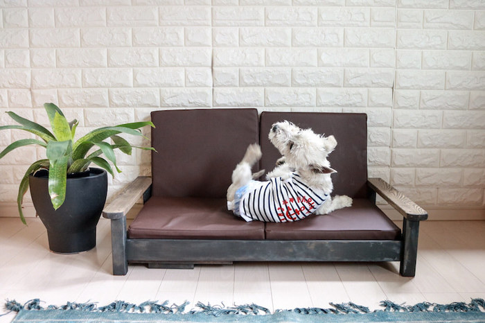 ペットの大きさに合わせたソファを自作することもできます!これなら、お部屋のインテリアを壊すことなく、自分たちで好みの色合いのものを作ることができますね。