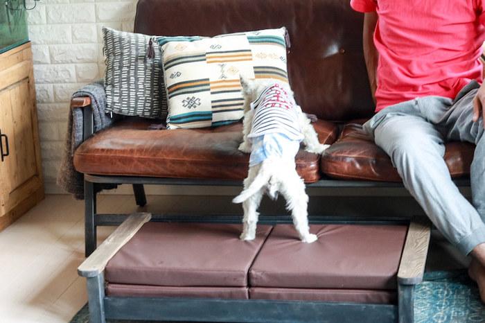 小型犬やお年を召したペットたちは座高の高いソファに飛び乗るのが難しいこともあります。そんなときは、足場をつくってあげると怪我をすることなく、ソファに乗ることができるようになります。