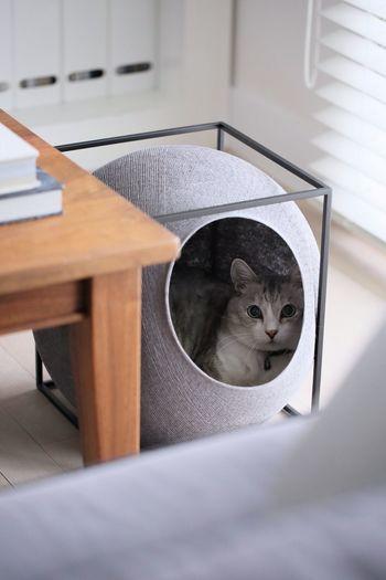 こちらはTHE CUBEという名のデザイン性の高いペットハウスです。包み込まれるような球体に、猫ちゃんは心から落ち着けそうです。