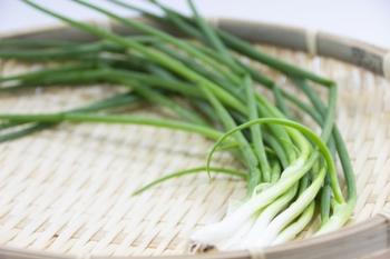 料理の彩りや薬味に大活躍♪プランターでも育てやすい「わけぎ」の栽培方法&レシピ