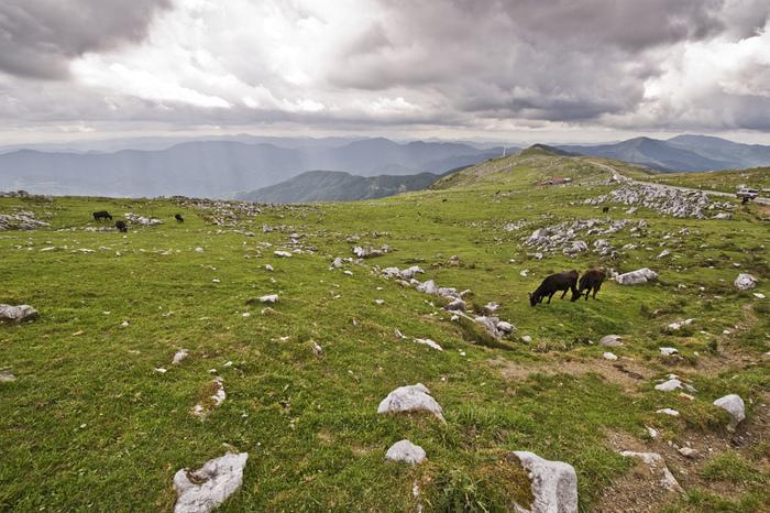 カルスト地形の独特の風景が存分に味わえるのが五段高原です。点々と露出する白い岩肌の合間を、のんびりと放牧される牛が歩く姿は牧歌的です。