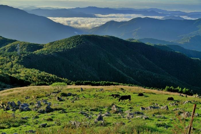 天空の絶景をドライブできる四国カルスト。美しい四国の山並みを眺めながら、時間を忘れてゆったりと自然を楽しむことができます。日本とは思えない景色の連続に会いに、ちょっと足を伸ばしてみたくなります。