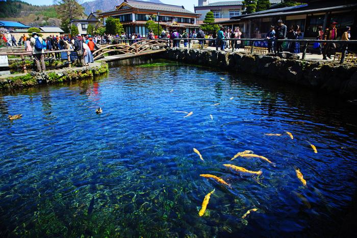 「忍野八海(おしのはっかい)」は、世界文化遺産である富士山の構成資産のひとつとして認定されています。その名の通り、8つの池があり、どれも富士山の湧き水が水源。江戸時代には、富士山に入山する前に身を清めるために訪れる巡礼地だったそう。そんな神秘的な場所を巡ってみませんか?