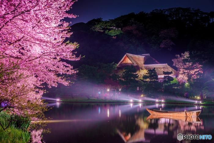 桜の季節にはライトアップイベントも開催されています。美しい夜桜と水面の光が幻想的。四季折々の魅力をぜひ感じてみてください。